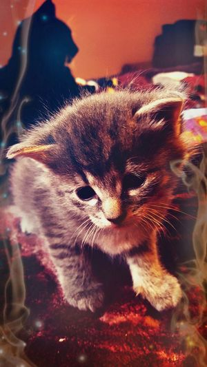 Cats 🐱 Kittens Cat♡ Check This Out Hello World Stella 2015  Enjoying Life Beautiful Love one of five lil ones