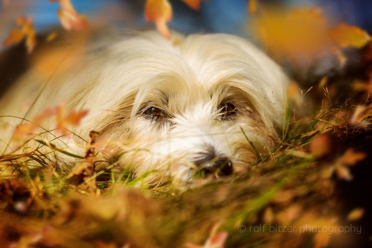 Hund Dog Pets Domestic Animals Animal Head  Close-up Looking At Camera Front View Looking Animal Hair