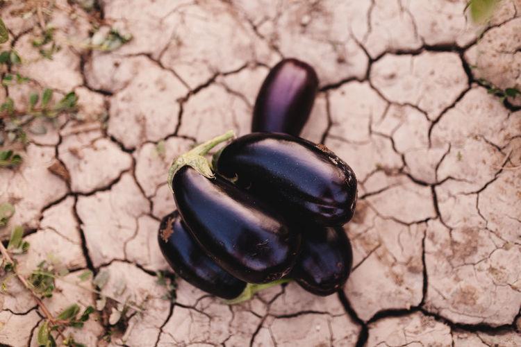 High angle view of eggplants on land