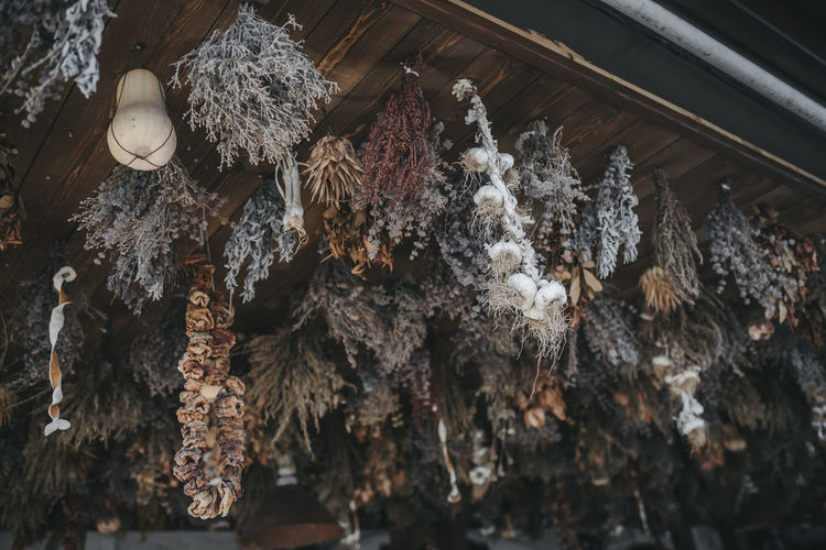 Hanging herbs Herbs Beauty In Nature Close-up Condiment Day Dried Herbs Dried Plant Dry Food Food And Drink Hanging Healthcare And Medicine High Angle View Indoors  Medicine Nature Organic Farming Organic Food Plant Still Life Tree Wood - Material
