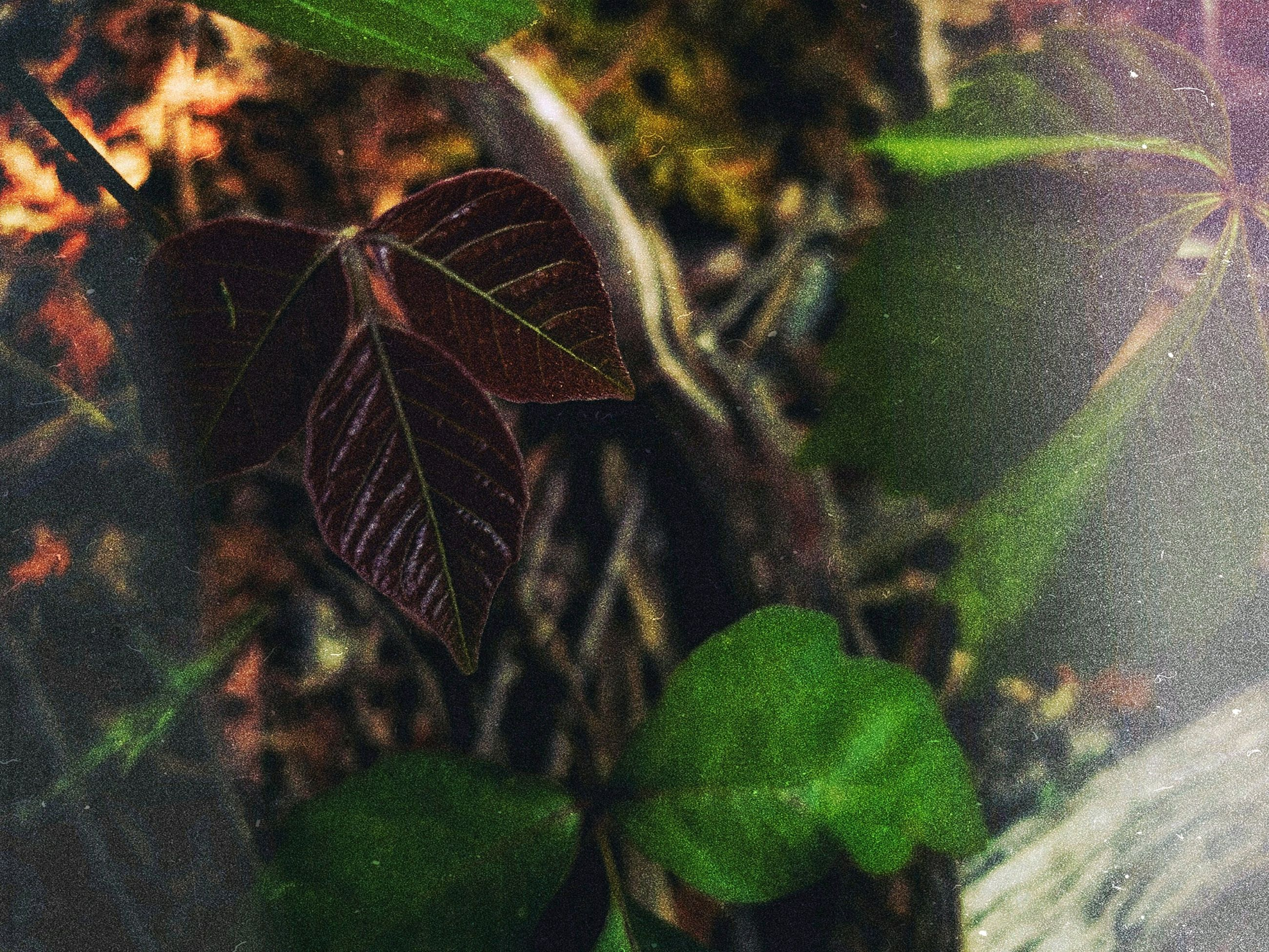 leaf, plant part, plant, close-up, growth, nature, focus on foreground, no people, beauty in nature, day, selective focus, green color, outdoors, tranquility, fragility, autumn, natural pattern, high angle view, vulnerability, change, leaves