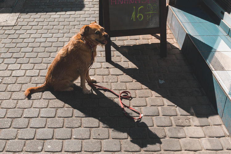 Portrait of brown dog by menu on footpath during sunny day