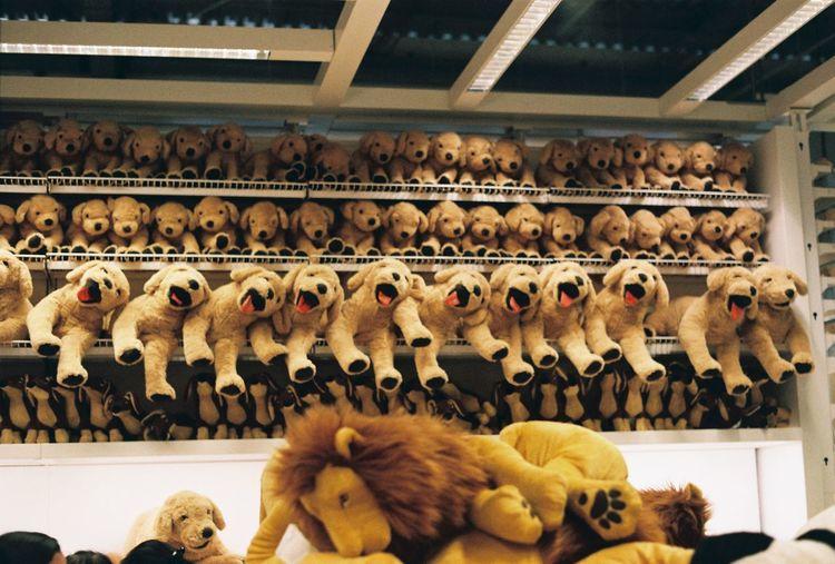 film camera Film IKEA Thai Dog Dor Film Photography Filmcamera Store