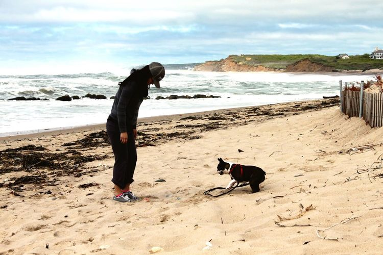 Montauk After The Storm After The Rain New York Ditch Plains Dogs Dogs Playing  Playing Games Playing Beach Waves Waves, Ocean, Nature Sky Montauk Cliffs Boston Terrier