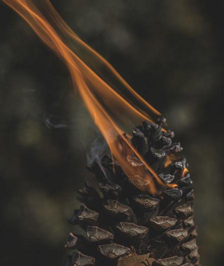 Close-up of burning pine cone