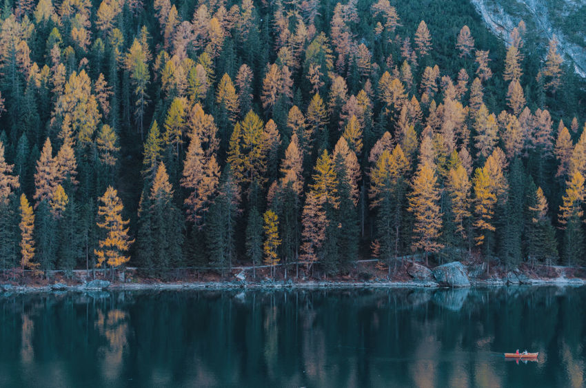 Dettagli Lago di Braies - Lago di Braies, Val di Braies, Val Pusteria, Trentino Alto Adige, Italia. LakeofBraies Braies Braieslake Trentinoaltoadige Trentinodavivere Valdibraies Valpusteria Mountain Mountainlover Autumncolours Coloursofnature EyeAmNewHere Lostinthelandscape Lostinthemoment Wood Nikonphotography Nikon D5100  Nikonphotographer Italy Aloneinthewoods Adventure Ig_italy Ig_trentinoaltoadige Love Lightsandshadows EyeEmNewHere Connected By Travel Second Acts Perspectives On Nature Be. Ready. Rethink Things Shades Of Winter An Eye For Travel