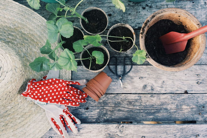 propagation and planting young plants Garden Gardening Gardening Equipment Garden Photography Plants Pelargonium Cutting Cuttings Propagation Propagate Human Hand Red Close-up Growing Low Section Plant Life
