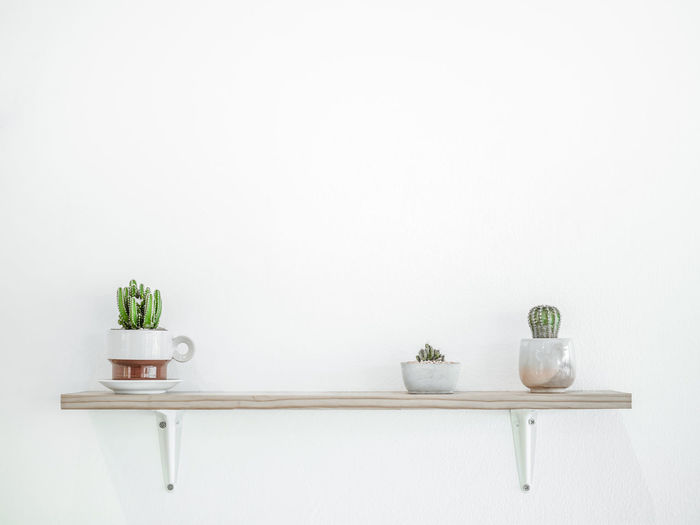 Potted plants on shelf by wall