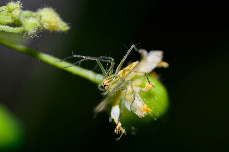 Spider Spider And Flower Macro Macro_collection Macro Photography Macro Insects Nature Animal Photography Beauty In Nature Insect