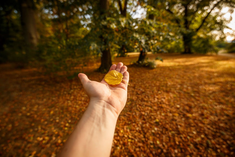Cropped image of person hand with autumn leaves on land