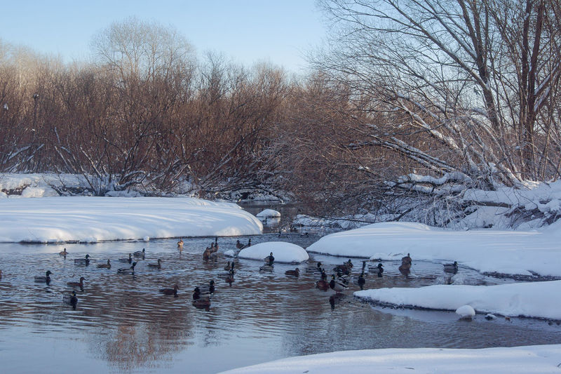 Beauty In Nature Bird Cold Temperature Day Lake Nature No People Sky Snow Tree Water Winter