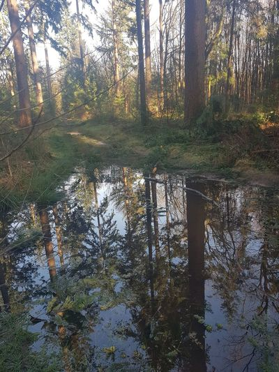 Tree Reflection Nature Forest Beauty In Nature Day No People Tranquility Leaf Sky Tranquil Scene