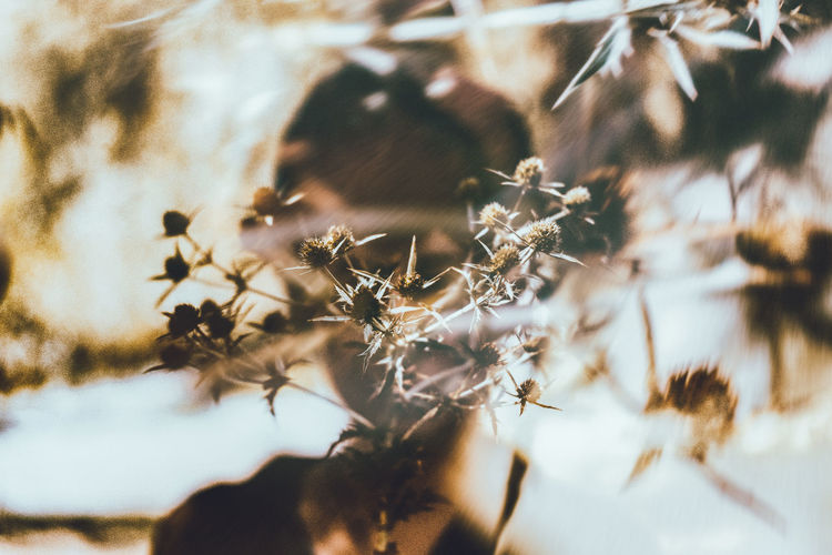 Double Exposure Abstract Abstract Animal Themes Beauty In Nature Close-up Day Flower Fragility Growth Nature No People Outdoors Porttrait Of A Woman
