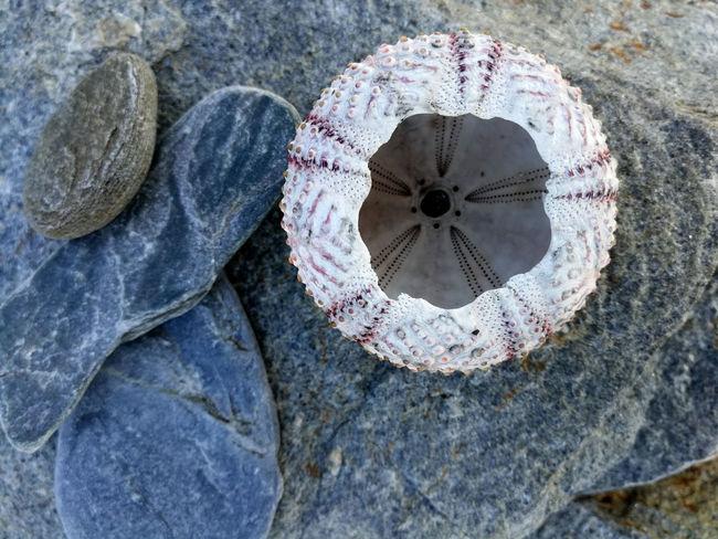 Esqueleto de un erizo de mar Abstract Marisco Marino Playa Esqueleto Espinas