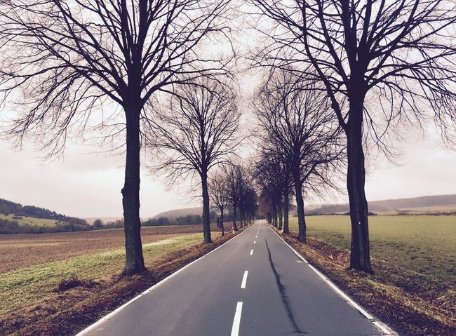 Bare Tree Beauty In Nature Day Landscape Nature No People Outdoors Road Scenics Sky The Way Forward Tranquility Transportation Tree