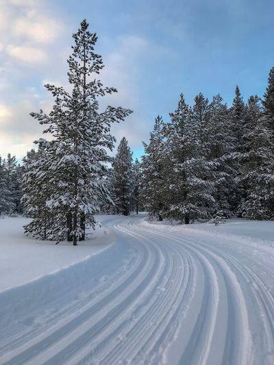 Cross country skiing Nordic Skiing Cross Country Skiing Crosscountryskiing Outdoor Life Sweden Scandinavia Snow Tree Winter Cold Temperature Plant Sky Nature Beauty In Nature No People Outdoors Landscape Scenics - Nature Tranquility
