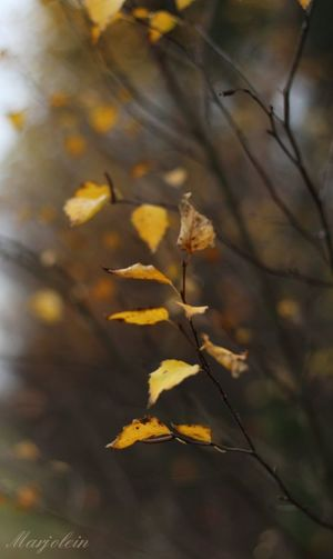 Autumn Leaf Nature Tree Outdoors Day Branch Plant Sunlight No People Close-up Beauty In Nature Hiking_walking Forestwalk Holland❤ EyeEm Nature Lover Capturedmoments Moodyphotography EyeEm Best Shots Yellow Tranquil Scene Beauty In Nature Plant Photography Outdoor Photography Be. Ready.
