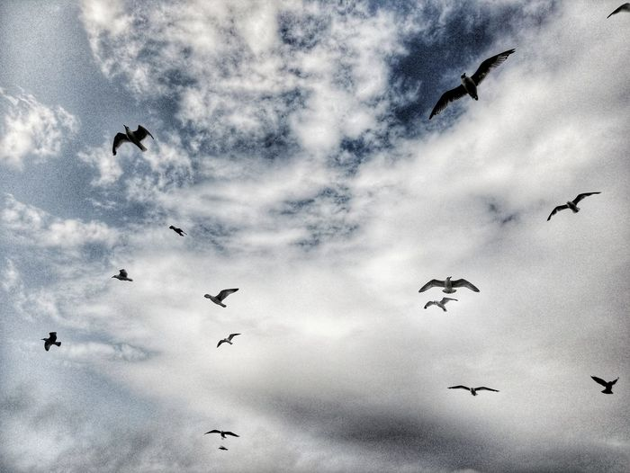 She flies like a bird in the sky... Seagull Seagulls Seagulls In Flight Cloud - Sky Cloud S And Birds Birds Birds Of EyeEm  HDR HDR Nature Flight Sky's The Limit Bird Spread Wings Flying Togetherness Mid-air Flock Of Birds Flapping