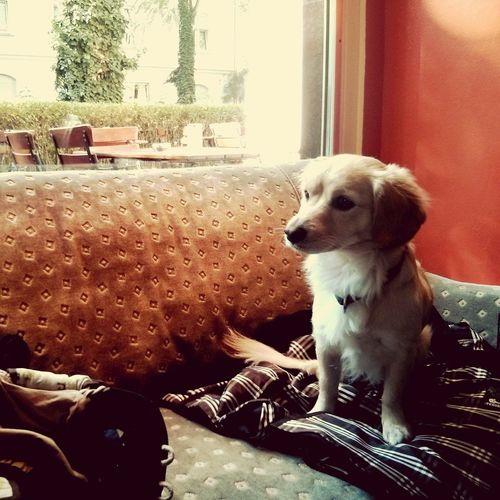 Meet Lucy. SundayFunday Lazysunday Coffee Time Cologne Dog Love
