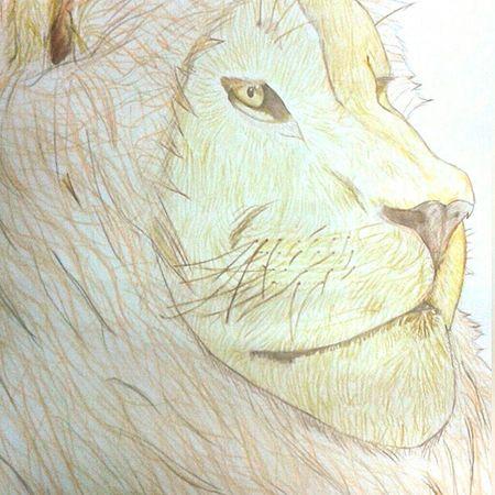Leão. Feito apenas com lápis de cor. Lion Drawing Desenho Leão Lapisdecor