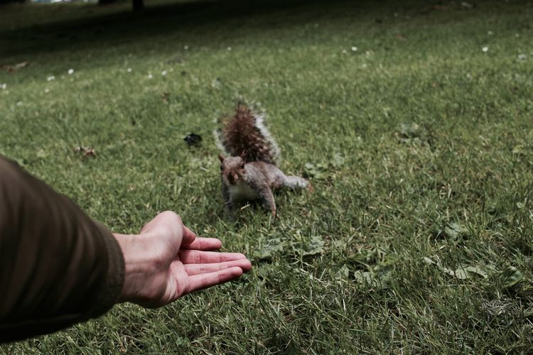 Cropped image of person by squirrel on field