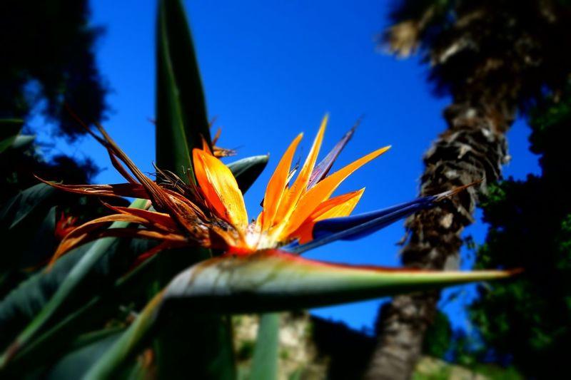 Orange Blue Sky Garden Shadows & Lights Colors Blurry On Purpose Selective Focus Flower Flower Head Blue Sky Close-up Plant Botany