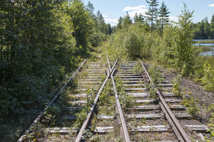 Railroad tracks amidst trees in forest Land Architecture Connection Sunlight Growth The Way Forward Day Track Plant Rail Transportation Abondoned Old Vacation Trolley Green Color Journey No People Metal Landscape Travel Direction Summer Iron - Metal Tree Train Outdoors Forest Transportation Steel Nature Railroad Track Dalarna Built Structure My Best Photo
