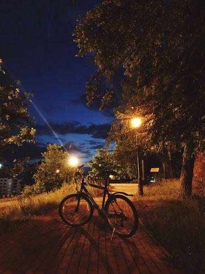 Bicycle Night Tree Illuminated Transportation Outdoors Sky No People Nature Taking Photos Kaliningrad Russia Daryasm City