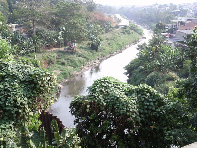 Ciliwung river with beautiful trees Beauty In Nature Day Environment Flowing Flowing Water Forest Green Color Growth High Angle View Land Nature No People Outdoors Plant Power In Nature Rainforest River Scenic View Scenics Scenics - Nature Tranquil Scene Tranquility Tree Water Waterfall