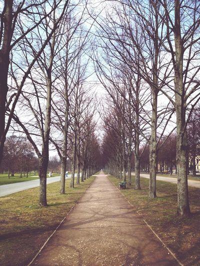 Nature Landscape Trees Taking Photos