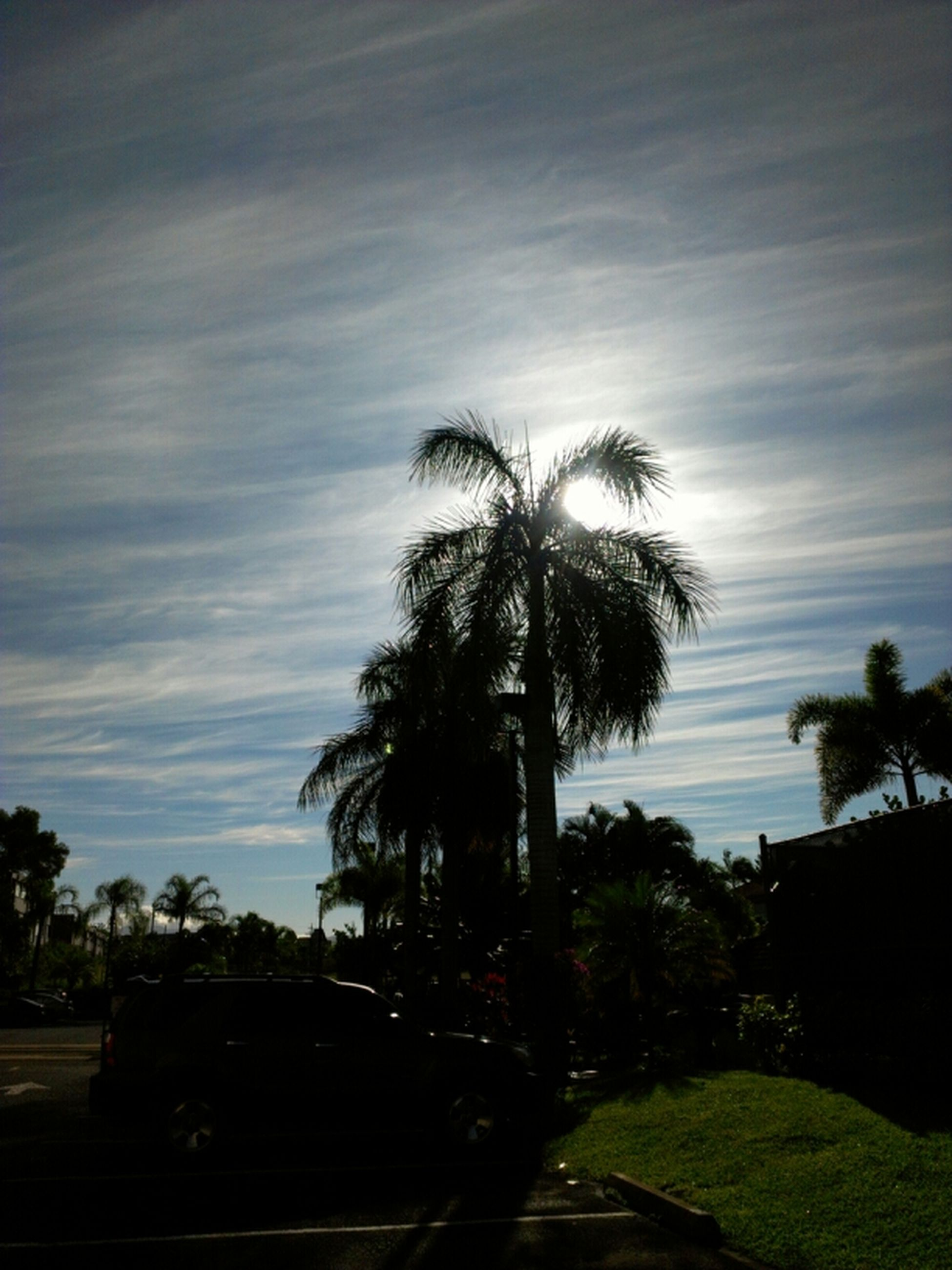palm tree, tree, sky, tranquility, growth, tranquil scene, silhouette, nature, beauty in nature, scenics, cloud - sky, water, tree trunk, sea, no people, outdoors, landscape, cloud, sunset, road