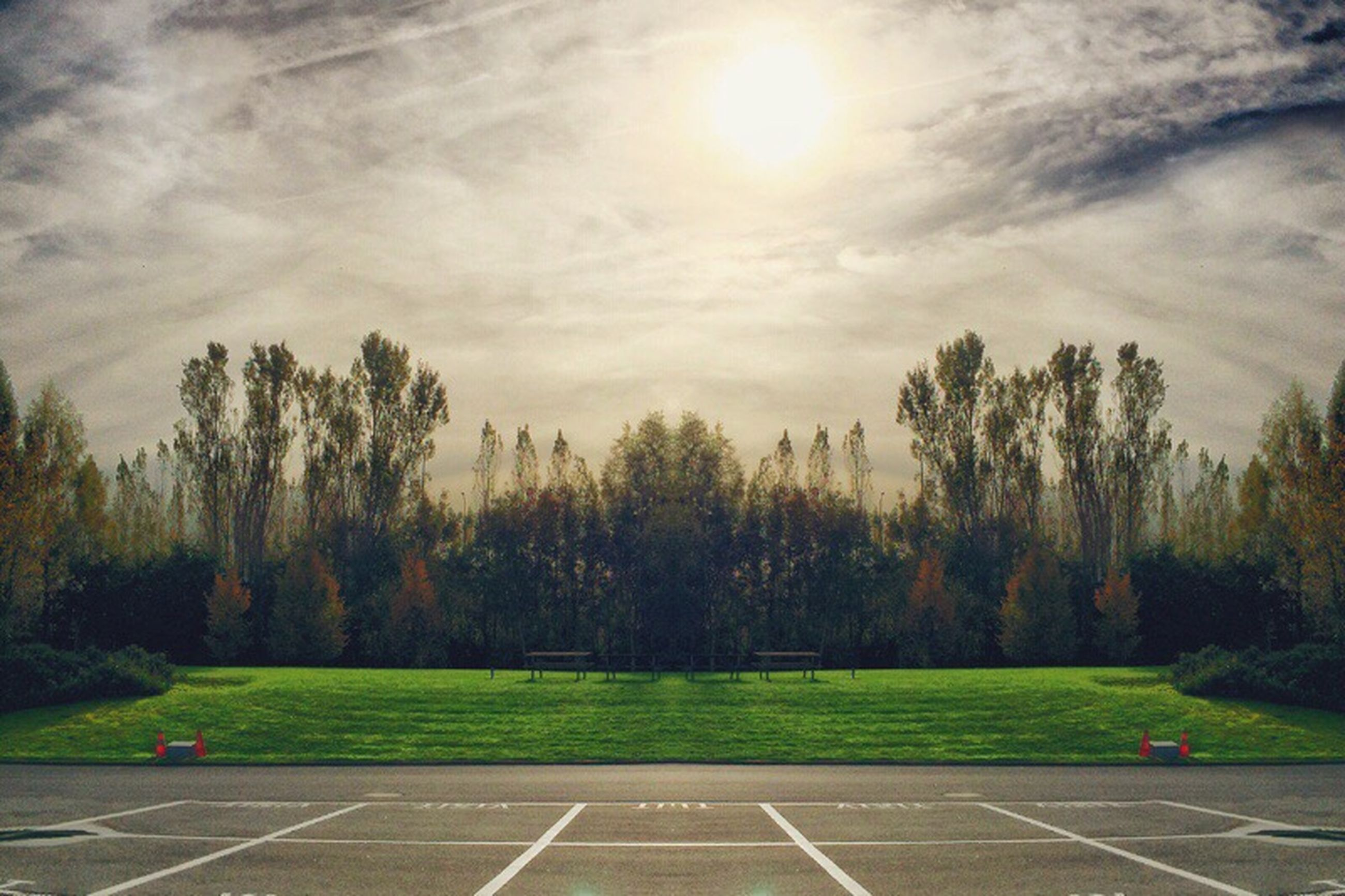 tree, sky, tranquility, grass, sunlight, tranquil scene, nature, beauty in nature, cloud - sky, scenics, growth, park - man made space, sun, sunbeam, landscape, road, outdoors, no people, field, lens flare