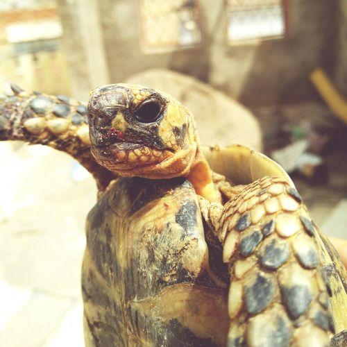 Selfie ✌ Turtlelover Turtle Selfieturtle