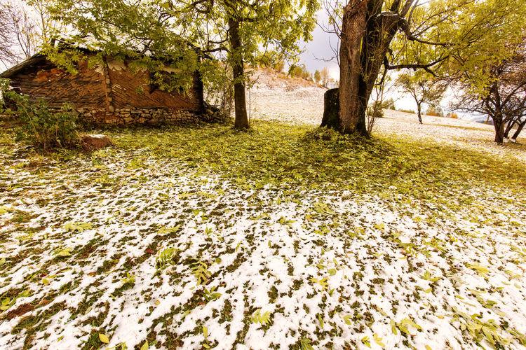 Leaves on field against trees