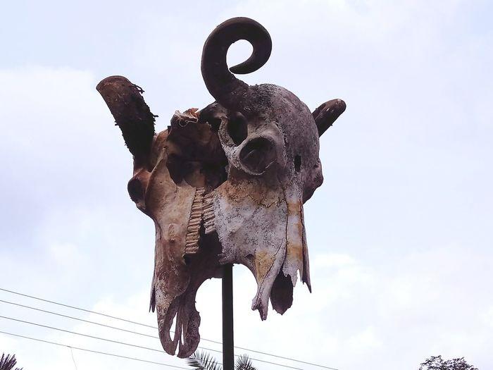 sculpture Dinasour Dinasour World Dinasour Bones Horror Dinasour Rex EyeEm Selects Sky Bull - Animal Cow American Bison Rhinoceros The Traveler - 2018 EyeEm Awards