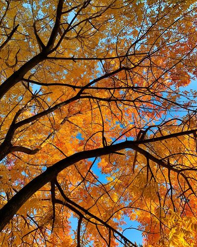"""""""Autumn Dreamscape"""" California Autumn Leaves Autumn Collection Fall Beauty Fall Colors Autumn colors Fall Leaves Autumn Leafs Autumn Tree Low Angle View Branch No People Full Frame Autumn Beauty In Nature Backgrounds Orange Color"""