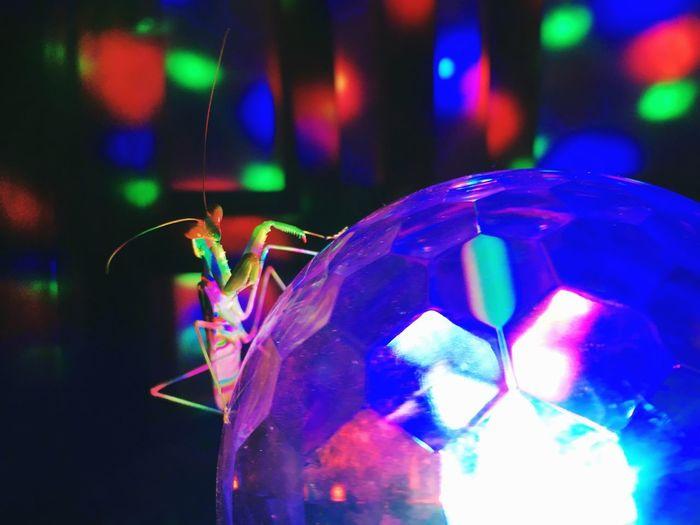 • Mantis Inna The Party • Johncalderon Travelisamust SPAIN Ojen Party Illuminated Multi Colored Focus On Foreground Close-up Night No People Indoors  Lighting Equipment Nightlife Vibrant Color Entertainment Club Light