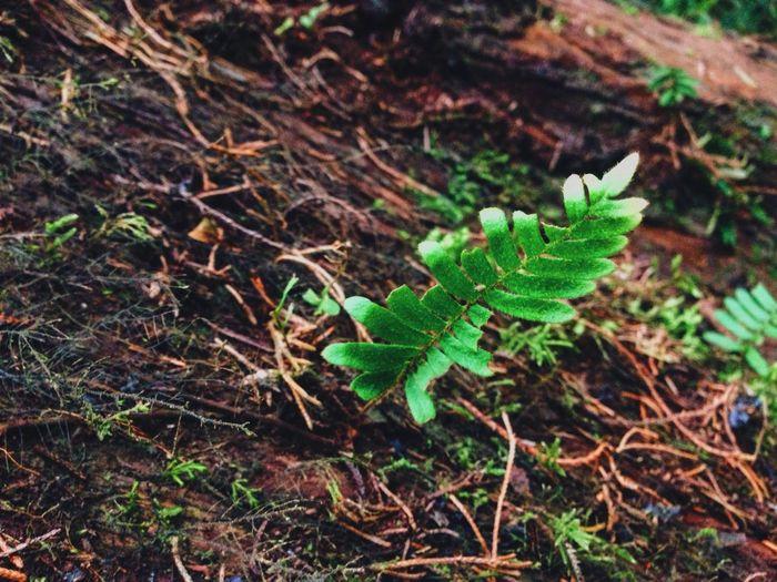 Flower Tree Plant Green Brown Bosque De La Hoja United Pretty Nature Road Trip Beauty Leave Forest Costa Rica