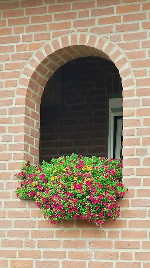 Windows Window Flowers In My Village Architectural Detail Bogenfenster Rotklinker Klinker Flowers