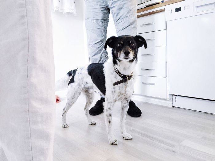 Portrait of dog standing amidst people in kitchen at home