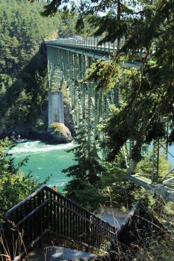 Bridge over trees by plants