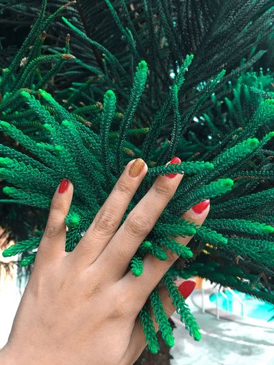 Close-up of woman hand touching plant