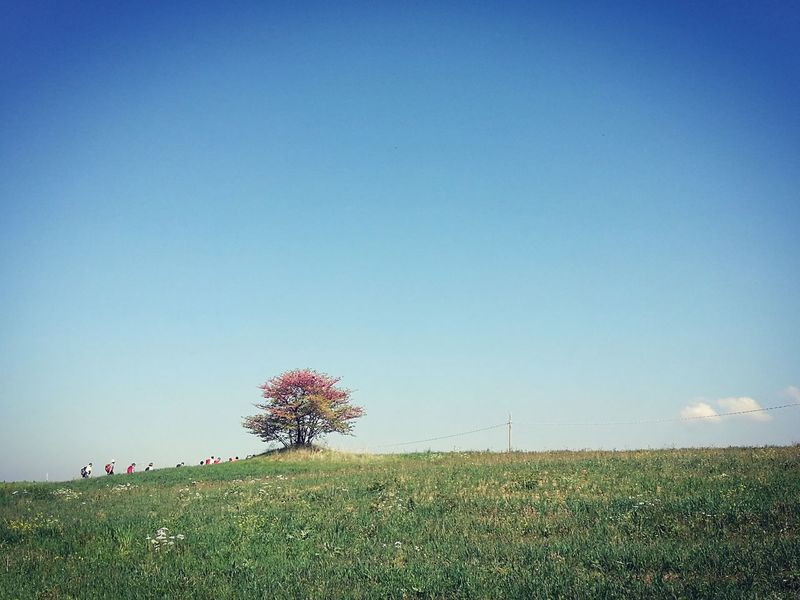 Clear Sky Blue Nature Sky Beauty In Nature Outdoors Day