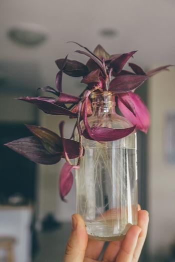Plants Purple Vine Vines Flower Flower Head Fragility Freshness Holding Houseplant Lifestyles Purple Flower