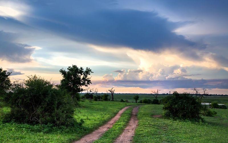 Chobe Nature