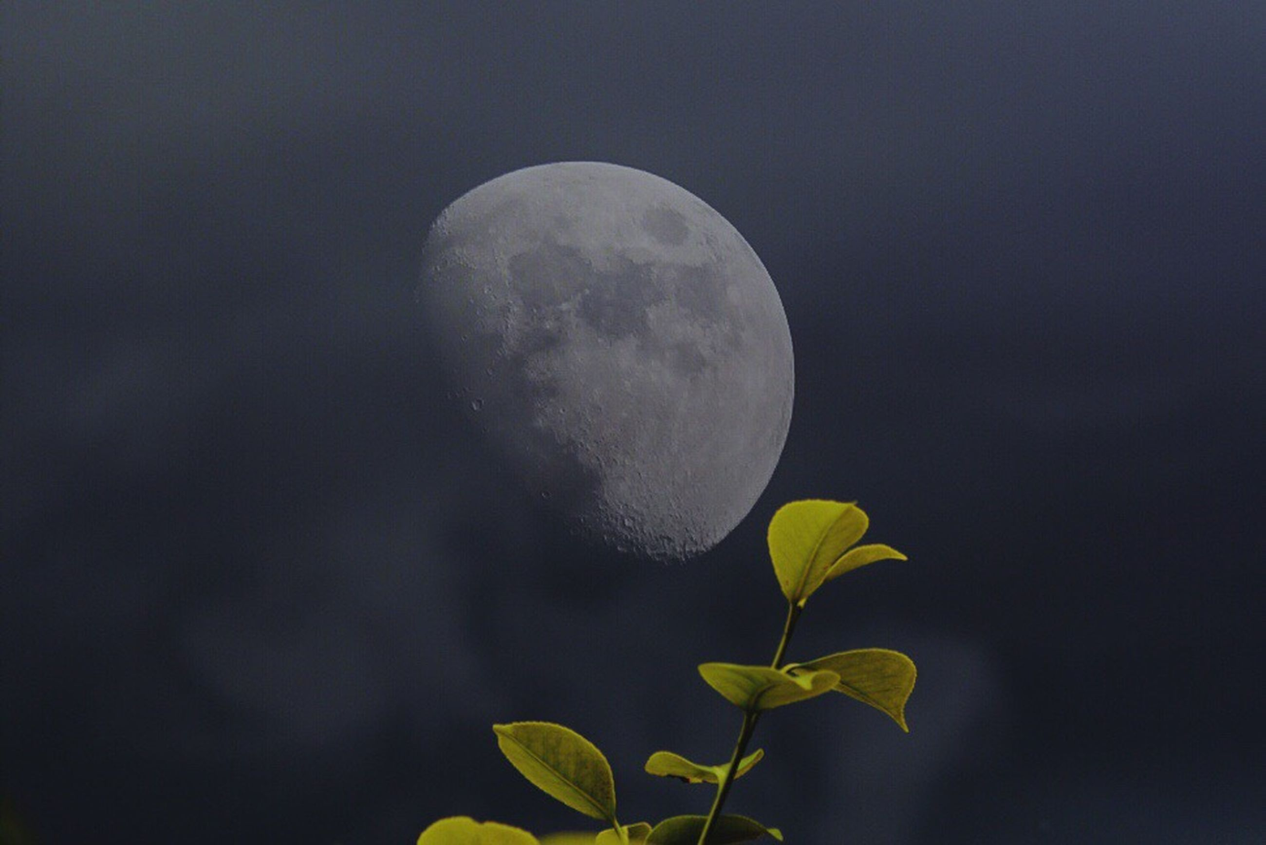 nature, beauty in nature, moon, night, growth, tranquility, outdoors, no people, plant, sky, flower, close-up, half moon, fragility, clear sky, astronomy, freshness