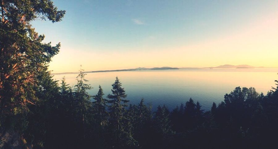 Chuckanut drive Chuckanut Tree Nature Tranquility Beauty In Nature Tranquil Scene Silhouette Heights Sunset Sky No People Growth Outdoors Water Clear Sky Mountain Scenery Day The Great Outdoors - 2018 EyeEm Awards