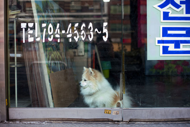 A dog is looking after it's owner's shop Outdoors Communication Building Exterior Focus On Foreground Domestic Animals Pets Window Animal Themes One Animal Animal Glass - Material Transparent Domestic Looking No People Day Text Reflection Looking Away Whisker Text Number Shope EyeEmNewHere Korea