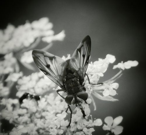 The fly... Macroclique Our Planet Bw_collection EyeEm Best Shots - Black + White