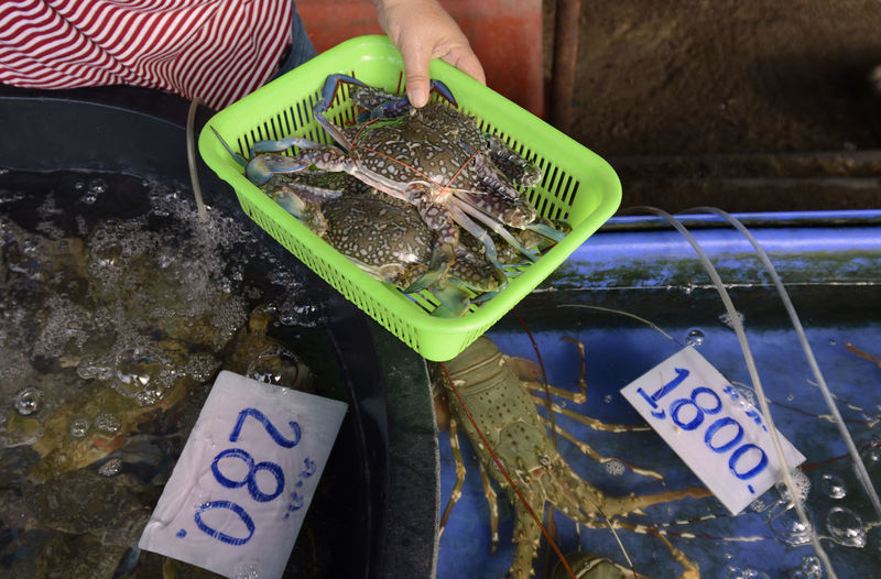 High angle view of person holding crabs in container at market